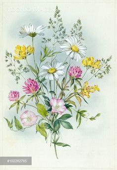 (32) Gallery.ru / Фото #33 - 2 - Fyyfvbwrtdbx1957 Realistic Flower Drawing, Floral Drawing, Botanical Drawings, Botanical Prints, Watercolor Flowers, Watercolor Paintings, Illustration Blume, Arte Floral, Floral Illustrations