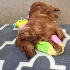 """""""You really can't ask for a better pillow than a best friend ... """"  16 Dogs Who Are Best Friends With Their Stuffed Animals"""