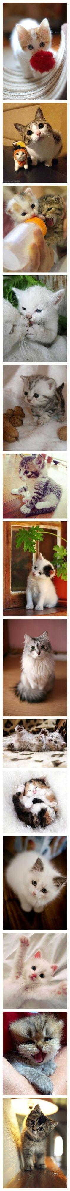 cats,so cute & so funny