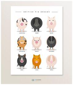 Cartel de cerdo Animal Print Ilustración de razas de cerdo