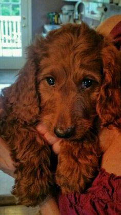 love this coat!  doggo needs petting!