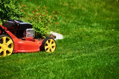 9 must-know solutions to repair your lawn