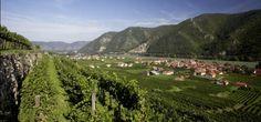 Weingut Rudi Pichler. #austria #wachau #vineyards