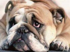 How Does Pet Insurance Works – Animal Health Info Dog Care Tips, Pet Care, Pet Health Insurance, Feline Leukemia, Walks, Pets, Routine, Entertainment, Animals