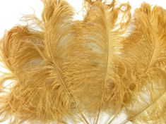 "50 pcs 8-10/"" long Gold Yellow Dyed Rooster COQUE tail Feathers for crafting NEW"