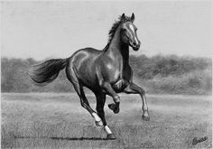 Horse Drawing Source - http://celvaya.deviantart.com/art/Breaking-Free-159043690