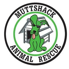 Hurricane Katrina animal victims. Dog & pet rescue organization | Muttshack Animal Rescue New Orleans
