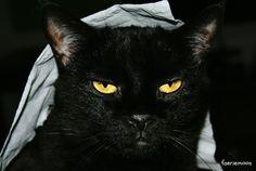 #NationalDogDay  The cat is not impressed #blackcat