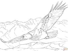 north american bald eagle coloring page from bald eagle category ... - American Bald Eagle Coloring Page