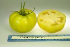 The hybrid Granny Smith tomato plant produces beautiful light green fruits with green interiors, thus the name, Granny Smith. The uniquely golden green tomatoes are nice sized, from 8-12 ounces, and have a tangy but sweet flavor that is different from any other tomato. The flavorful Granny Smith tomato is an excellent slicing tomato that is perfect for making fried green tomatoes, pickling and can be diced up for an outstanding Salsa Verde.