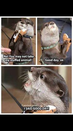 20 Funny Animal Jokes and Memes humor Funny Animal Memes, Cute Funny Animals, Funny Animal Pictures, Cute Baby Animals, Funny Cute, Animal Pics, Funniest Animals, Animal Funnies, Hilarious Pictures