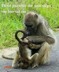 My Works - Wattpad Cute Animal Memes, Animal Quotes, Funny Animals, Witty Quotes, Funny Quotes About Life, Inspirational Quotes, Funny Sayings, African Jokes, Africa Quotes