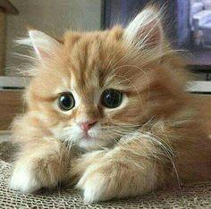 Kitten #kitten #cat #cats #kitten #kittens #cute
