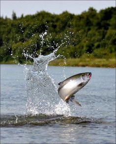 Salmon fishing. For more fly fishing info follow and subscribe www.theflyreelguide.com Also check out the original pinners/creators site and support