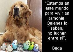 Estamos en este mundo para vivir en armonía. Quienes lo saben no luchan entre sí. Buda