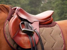 Choosing a Saddle and Accessories for your Horse | Pets4Homes