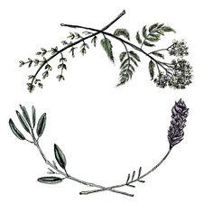 Yarrow, Sage, Lavender, Thyme Framed Art Print by alltheumbrellasinlondon