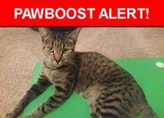 Please spread the word! Benny was last seen in Austin, TX 78704.    Nearest Address: Near Trailside Dr & Robert E Lee Rd