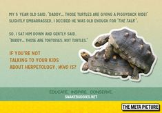 """He's Old Enough For The Talk - For those who are no doubt, confused, tortoises are LAND anmals.  Turtles are the ones that swim.  You don't say """"sea tortoises"""" because that doesn't exist at all."""