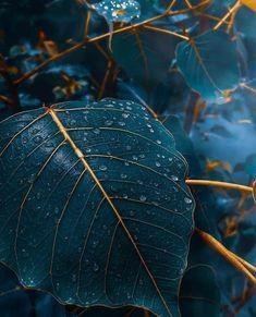 Blau Fall time blue elegant leaves What Is An Atomic Clock? Fall Background Wallpaper, Fall Wallpaper, Colorful Wallpaper, Flower Wallpaper, Nature Wallpaper, Leaves Wallpaper, Iphone Wallpaper Elegant, Mobile Wallpaper, Stunning Wallpapers