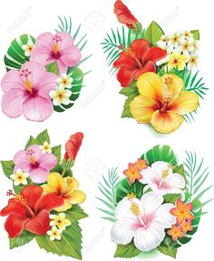 Buy Arrangement from Hibiscus Flowers by on GraphicRiver. Arrangement from hibiscus flowers. Tropical Flowers, Tropical Flower Tattoos, Hibiscus Flowers, Exotic Flowers, Beautiful Flowers, Purple Flowers, Plumeria Flower Tattoos, Lilies Flowers, Big Flowers