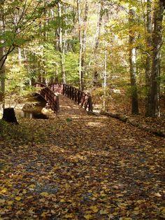 Black Hill Regional Park-Hiking Trails - potential replacement site #furlough