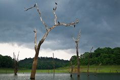 Periyar WIldlife Sanctuary, Kerala, India