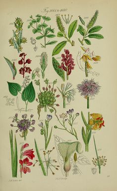 n396_w1150 by BioDivLibrary, via Flickr