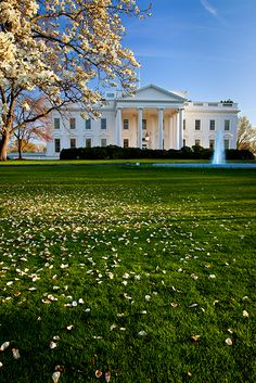The White House, Washington DC - I visited here while Ike was President. The tours were lots more extensive than they were when my kids were little.