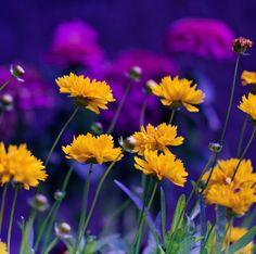 """fleurs-et-champis: """"pouvez-vous me voir par sumahli"""""""