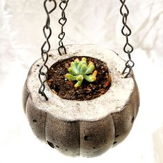 Small diy succulent and cactus pots made with cement and household plastic waste. Cactus Pot, Plastic Waste, Succulents Diy, Cement, Pots, The Creator, Household, Cookware, Jars