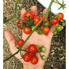 Grow Vegetables, Fruits & Herbs   Aeroponic Tower Garden http://jsandstrom.towergarden.com/Vertical Garden