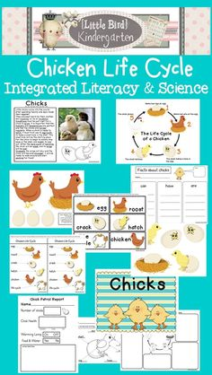 Chicken LIfe Cycle Literacy and Science Unit - also included - Informational Text Activity with writing $