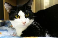 Tom has been adopted from PetSmart in North Seattle, a Seattle Humane satellite location. http://www.seattlehumane.org/adoption/cats