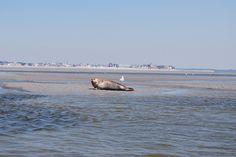 La Baie de Somme est surtout connue pour sa colonie de phoques, sa faune, sa flore et ses paysages qui ont de quoi faire rêver.