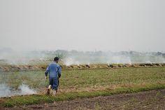 菰野町(こもの)潤田地区 畦道の野焼き 平成24年9月29日早朝撮影
