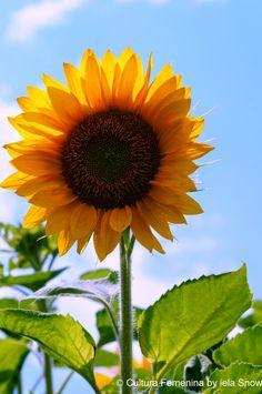 Granja de Girasoles Yahoo Images, Image Search, Plants, Images Of Sunflowers, Farmhouse, Culture, Events, Feminine, Fotografia
