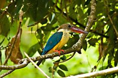 kumarakom bird sanctuary - Google Search