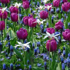 bloembollenmengsel - Google zoeken