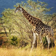 Taking a stroll in Entabeni Game Reserve in Johannesburg.