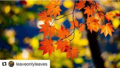 Thank you. #Repost @leaveonlyleaves with @repostapp   SOLO WINNER   Congratulations! Please check out this winner's profile: ________________________________________ @takafumiito ________________________________________  Featured by: @olive_wa  TO BE FEATURED ADD: @leaveonlyleaves TAG: #leaveonlyleaves There are many more to come so stay tuned invite your friends and keep tagging!!!