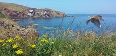 Coast from St Abbs. Brown head and white on wings suggest bird in shot is a tree sparrow. And not a tree in sight.