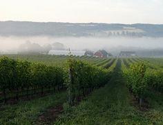 Gaspereau Winery in Nova Scotia