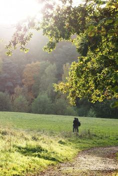 Winkworth Arboretum, in Godalming is a beautiful place to visit in autumn.