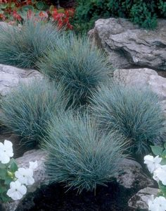 75 Low Maintenance Small Front Yard Landscaping Ideas HomeSpecially – Famous Last Words Small Front Yard Landscaping, Landscaping With Rocks, Landscaping Plants, Landscaping Ideas, Inexpensive Landscaping, Landscaping Edging, Hillside Landscaping, Outdoor Landscaping, Fescue Grass
