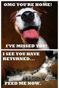 The difference between dogs and cats. Dogs are pleased to see you.  Cats wonder what happened to room service.