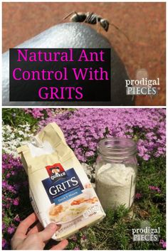 Banish ants naturally with grits