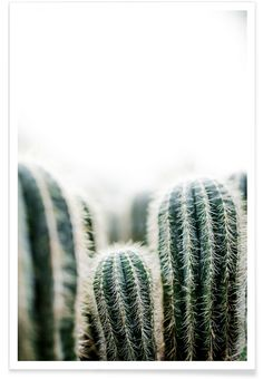 Bilder Cactus 1 as a poster in a plastic frame by Mareike Böhmer Cactus Backgrounds, Tumblr Backgrounds, Cool Backgrounds, Tumblr Wallpaper, Buy Cactus, Cactus Art, Cactus Plants, Image Cactus, Arabesque Design