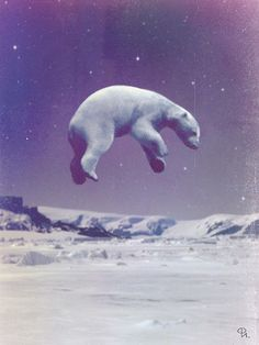 floating polar bear