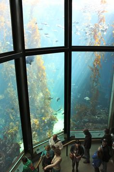 Why a visit to the Monterey Bay Aquarium should be on family's California bucket list // Family Travel   Travel with Kids   California Road Trip